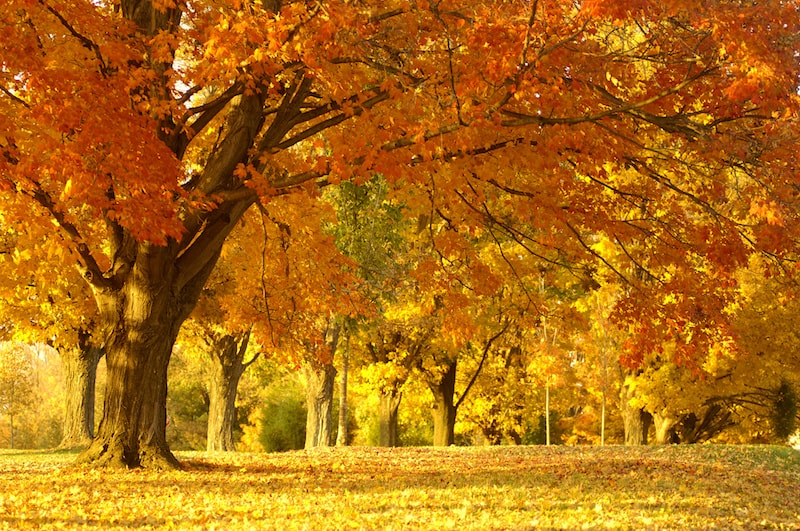 Où partir en octobre pour se régaler?